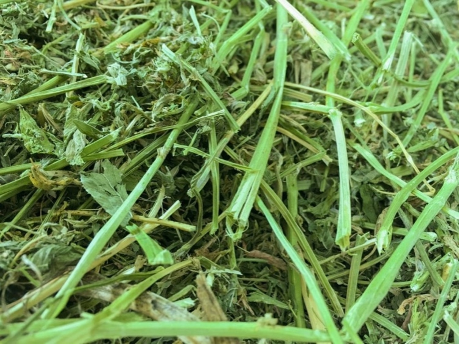 Animal feed from alfalfa before
